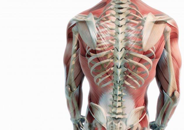 Adler Apotheke - Rückenschmerzen